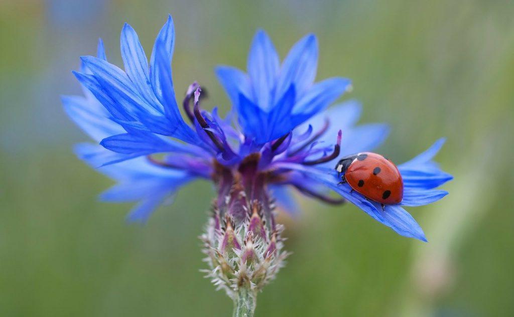 Ladybug on flower